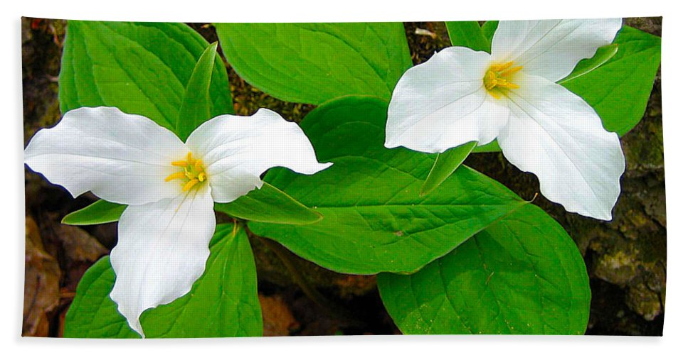 Ontario Hand Towel featuring the photograph Two Trillium by Nina Silver