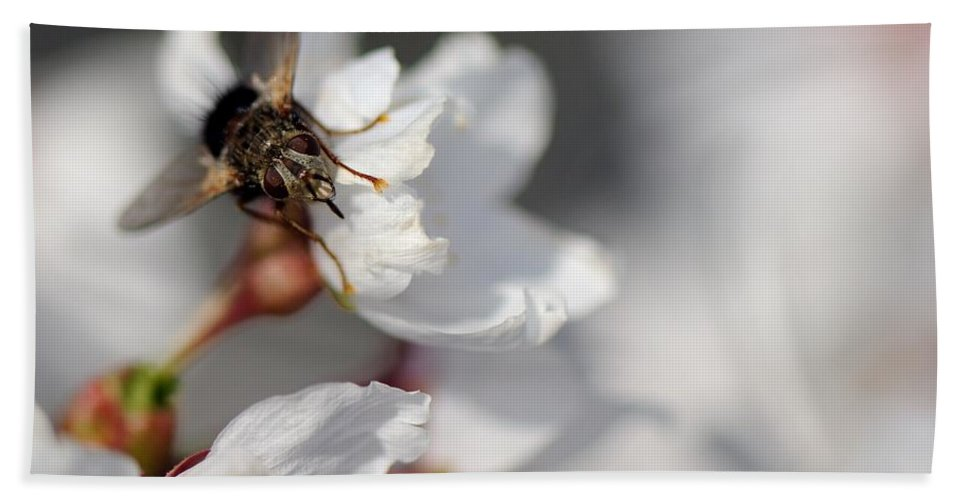 Fly Hand Towel featuring the photograph Ugly Pollinator by Ian Ashbaugh