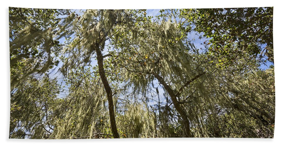 Los Osos Oak State Natural Reserve Hand Towel featuring the photograph Under The Canopy - The Magical And Mysterious Trees Of The Los Osos Oak Reserve by Jamie Pham