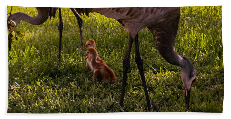 Sandhill Crane Chicks Hand Towel featuring the photograph Under The Orange Tree by Zina Stromberg