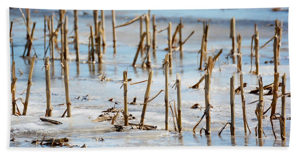 Artic Thaw Hand Towel featuring the photograph Underwater Cornfield by Tracy Winter