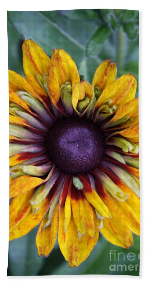 Sunflower Bath Sheet featuring the photograph Unique Sunflower by Christiane Schulze Art And Photography