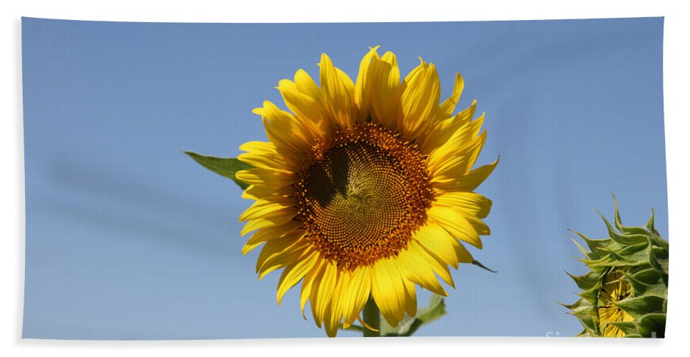 Sunflowers Hand Towel featuring the photograph United Through Challenge by Amanda Barcon