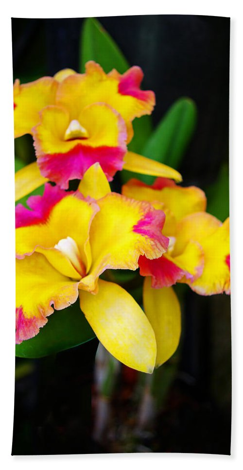 Orchids Hand Towel featuring the photograph unnamed - Orchid by Rich Walter
