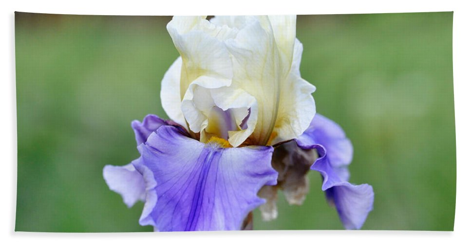 Iris Bath Sheet featuring the photograph Up Close Elegant Iris by Teri Schuster