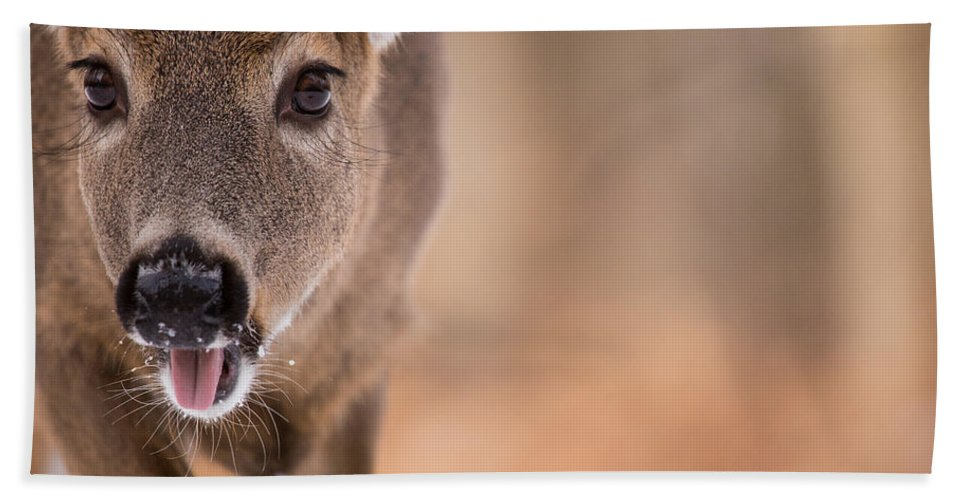 Deer Hand Towel featuring the photograph Up Close White Tail by Karol Livote
