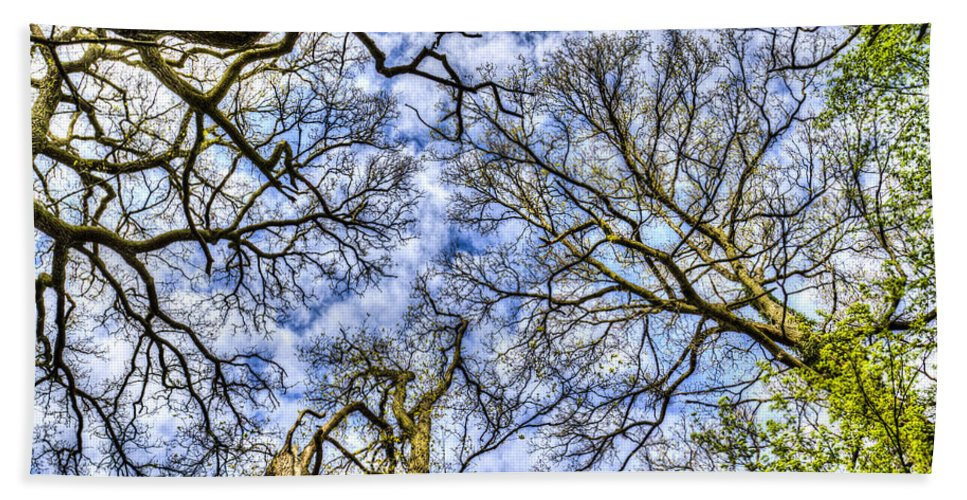 Forest Bath Sheet featuring the photograph Up Into The Trees by David Pyatt