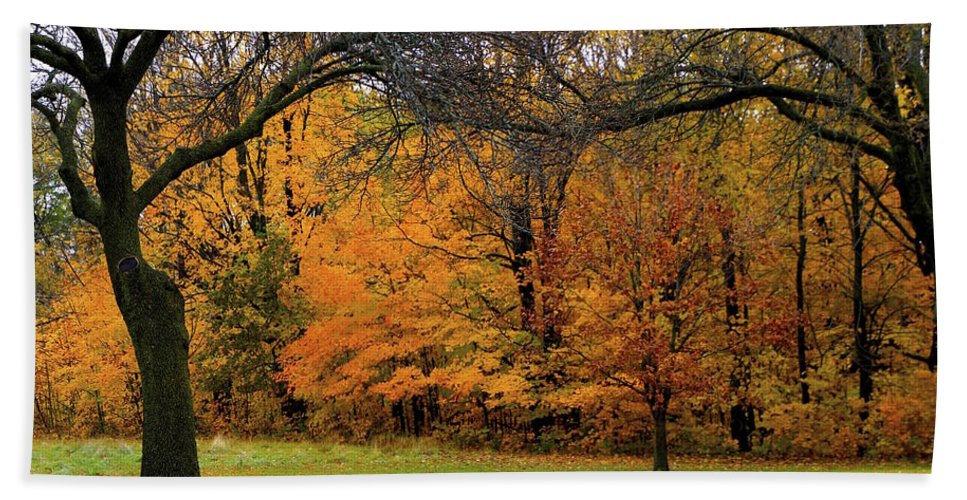 Trees Bath Sheet featuring the photograph Uprightness by Debbie Nobile