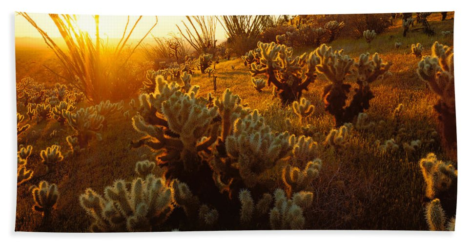 Photography Hand Towel featuring the photograph Usa, Arizona, Sonoran Desert, Ocotillo by Panoramic Images