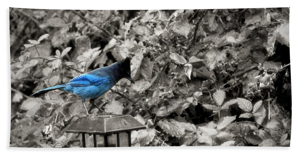 Hood River Bath Sheet featuring the photograph Vagabon Blue Bird by Image Takers Photography LLC