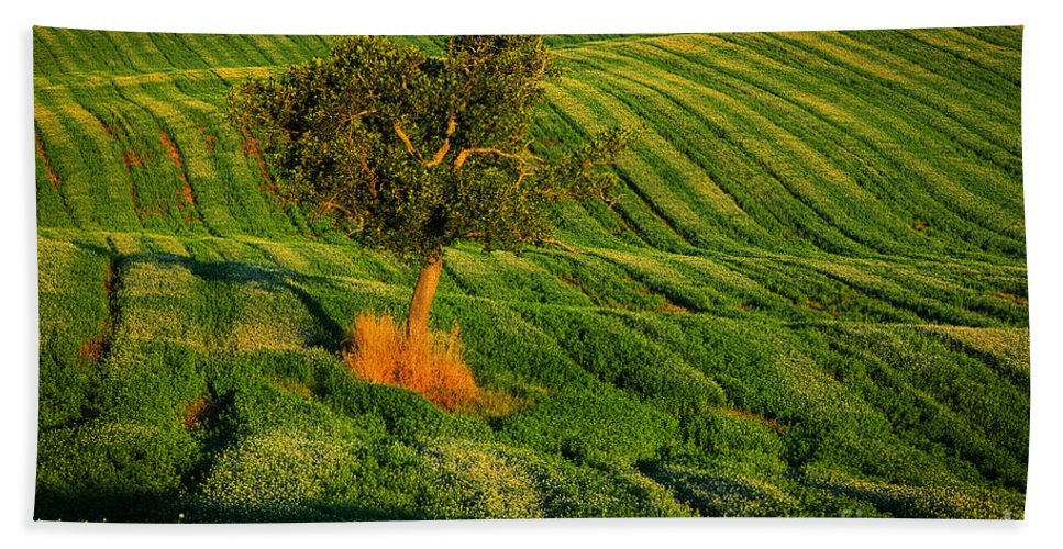 Europe Hand Towel featuring the photograph Val D'orcia Tree by Inge Johnsson