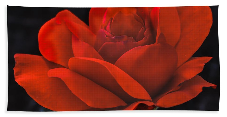 Perennial Bath Towel featuring the photograph Valentine Rose by Robert Bales