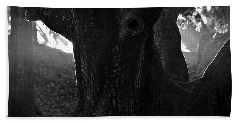 Oak Tree Hand Towel featuring the photograph Valley Of The Oak by David Lee Thompson