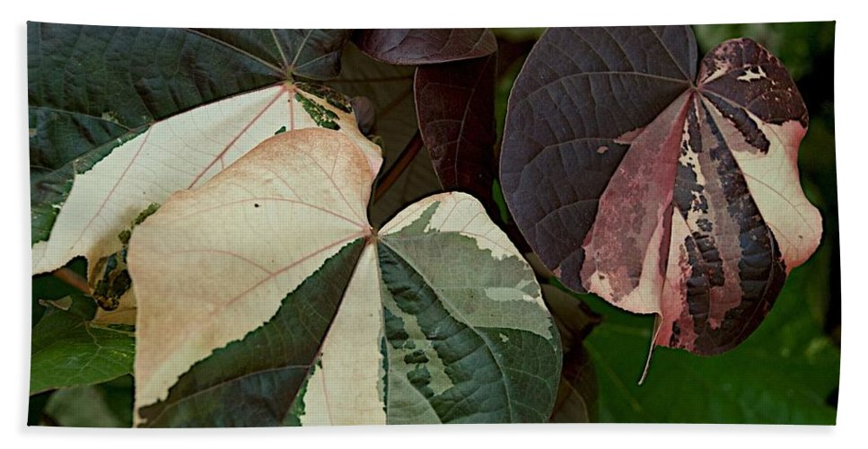 Flower Leaves Bath Sheet featuring the photograph Variegated by Joseph Yarbrough