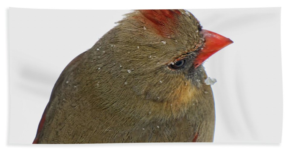 Cardinal Bath Sheet featuring the photograph Veiw From Above by Debbie Portwood