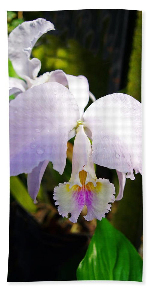 Orchids Hand Towel featuring the photograph Veraflora Orchid by Rich Walter