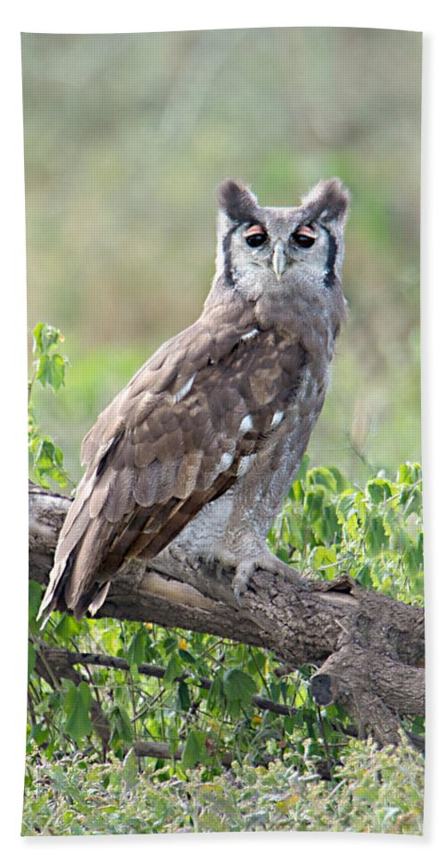 Photography Hand Towel featuring the photograph Verreauxs Eagle-owl Bubo Lacteus by Panoramic Images