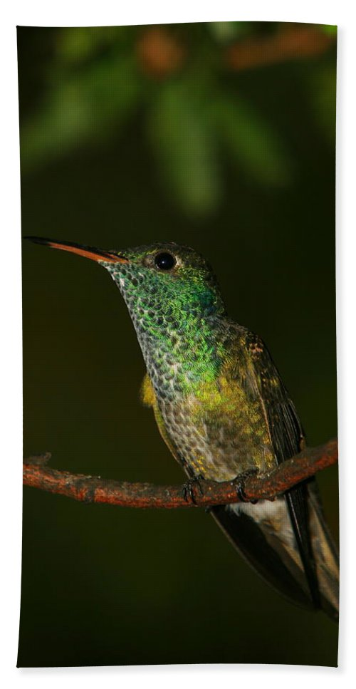 Hummingbird Bath Sheet featuring the photograph Versicolored Emerald by Bruce J Robinson