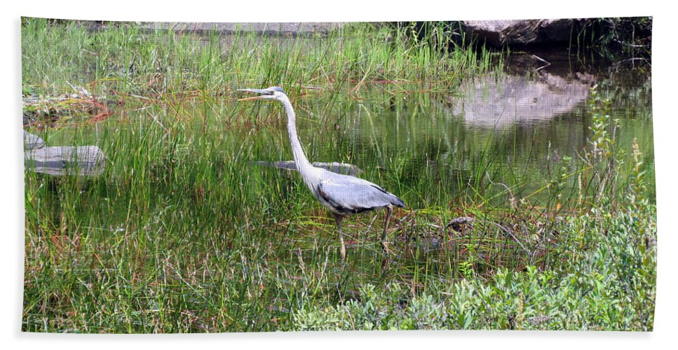 Blue Heron Bath Sheet featuring the photograph Very Hungry Blue Heron by Elizabeth Dow