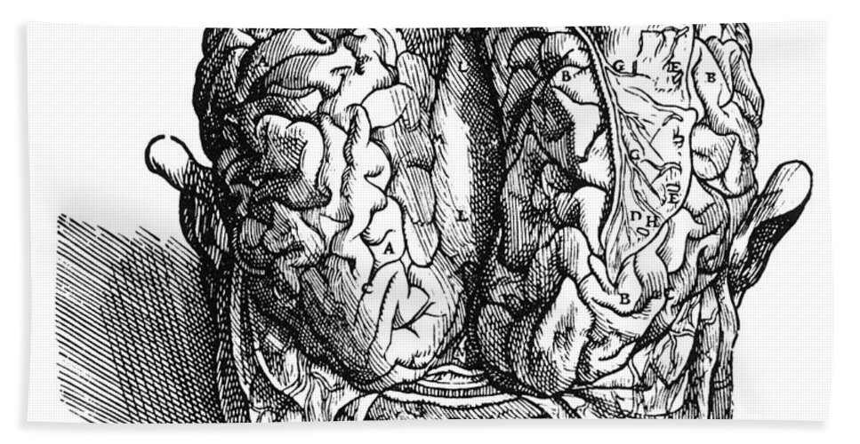1543 Bath Sheet featuring the photograph Vesalius: Brain, 1543 by Granger