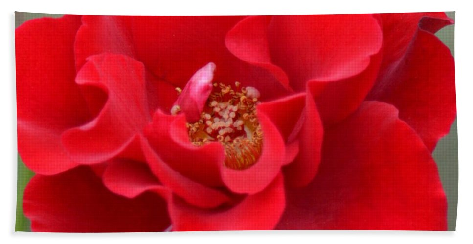Vibrantly Red Rose Bath Sheet featuring the photograph Vibrantly Red Rose by Maria Urso