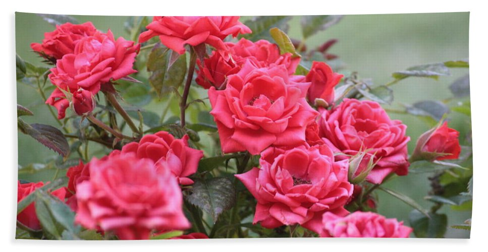 Roses Hand Towel featuring the photograph Victorian Rose Garden by Carol Groenen