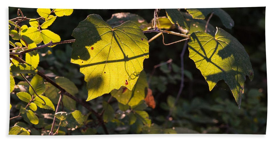 Vine Bath Sheet featuring the photograph Vine Leaves At Sunset by JG Thompson