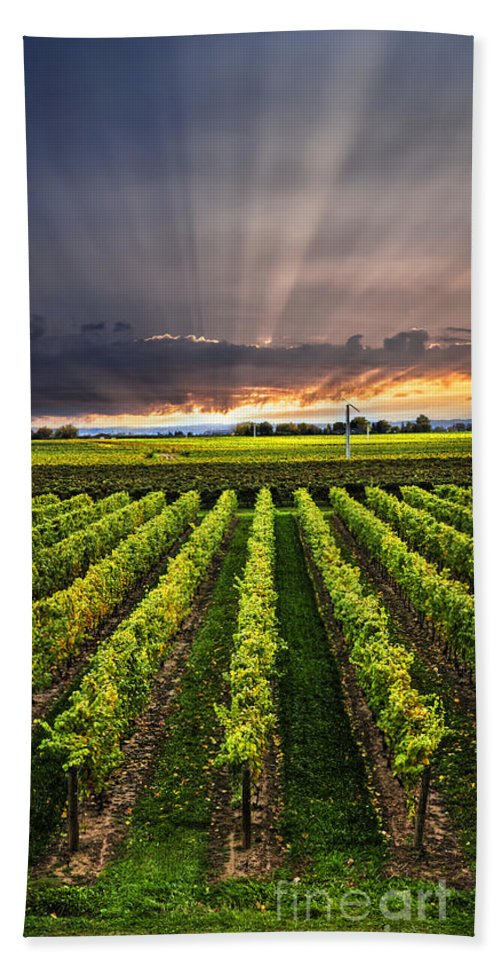 Vineyard Bath Sheet featuring the photograph Vineyard At Sunset by Elena Elisseeva