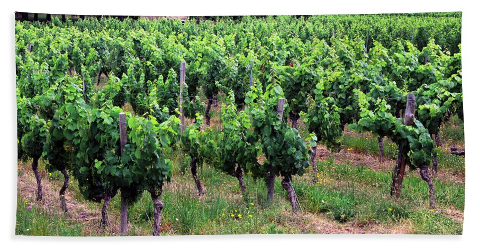 Vineyard Hand Towel featuring the photograph Vineyard by Dave Mills