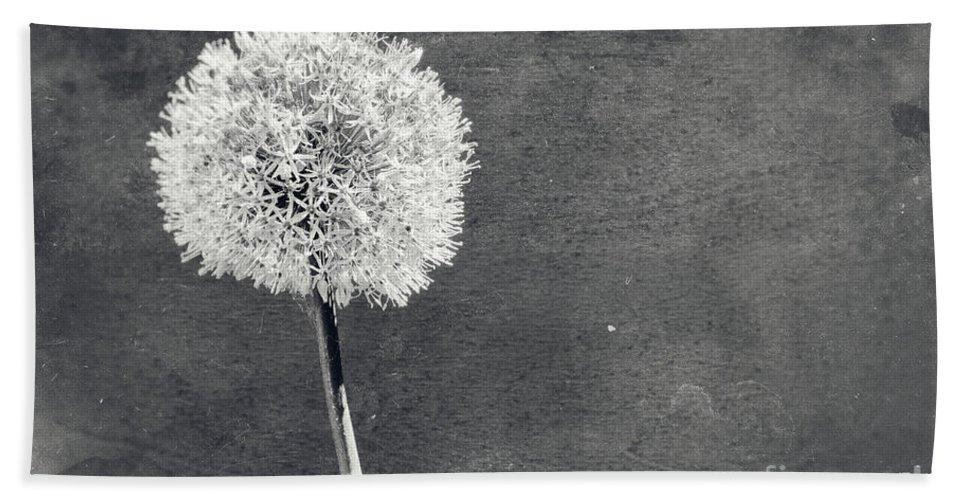 Allium Hand Towel featuring the photograph Vintage Allium Flower by Julian Eales