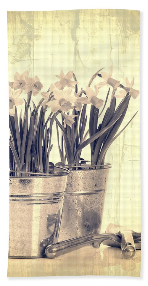 Daffodil Hand Towel featuring the photograph Vintage Daffodils by Amanda Elwell