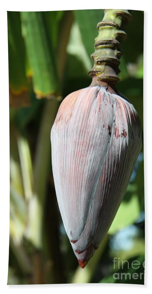 Banana Tree Hand Towel featuring the photograph Violet Banana Blossom by Christiane Schulze Art And Photography