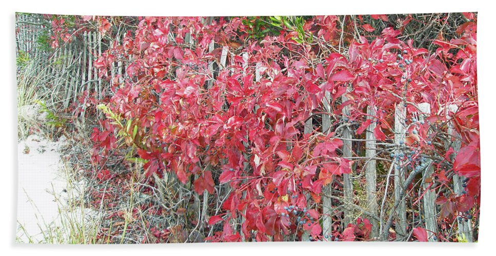 Fall Bath Sheet featuring the photograph Virginia Creeper Vine On Dune Fence - Fall Colors by Mother Nature