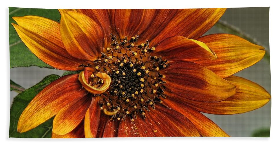 Sunflower Bath Sheet featuring the photograph Visions Of Summer by Peggy Hughes