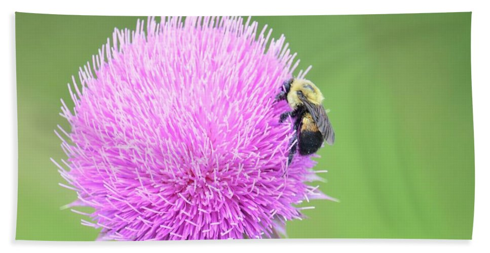 Visitor On Thistle Bath Sheet featuring the photograph Visitor On Thistle by Maria Urso