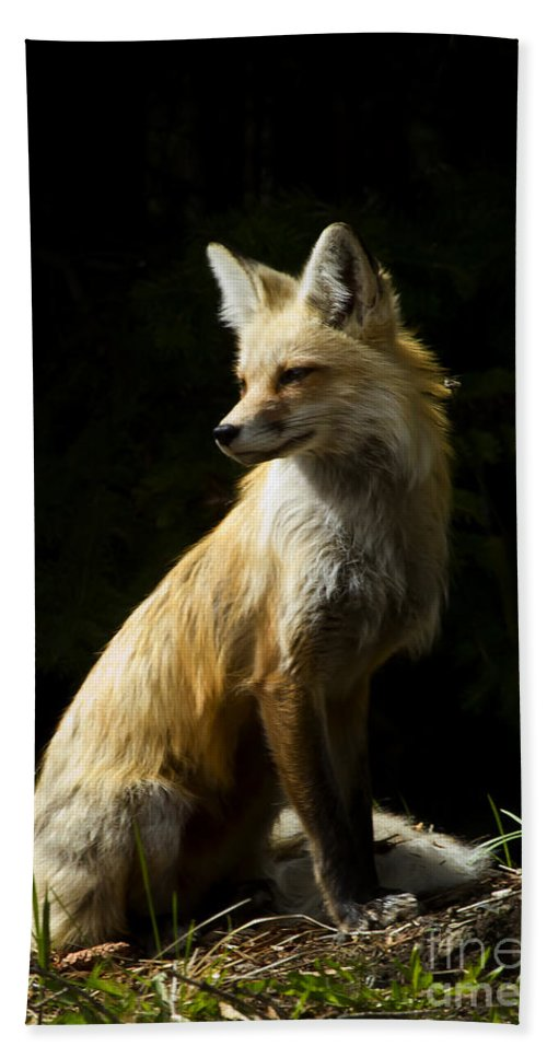 Fox Hand Towel featuring the photograph Vixen Fox  #4251 by J L Woody Wooden