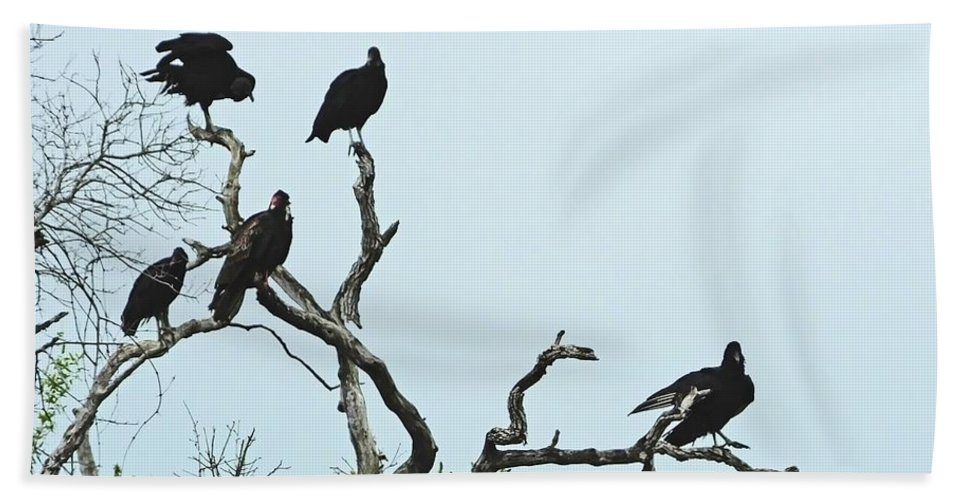 Vulture Hand Towel featuring the photograph Vulture Club by Lizi Beard-Ward