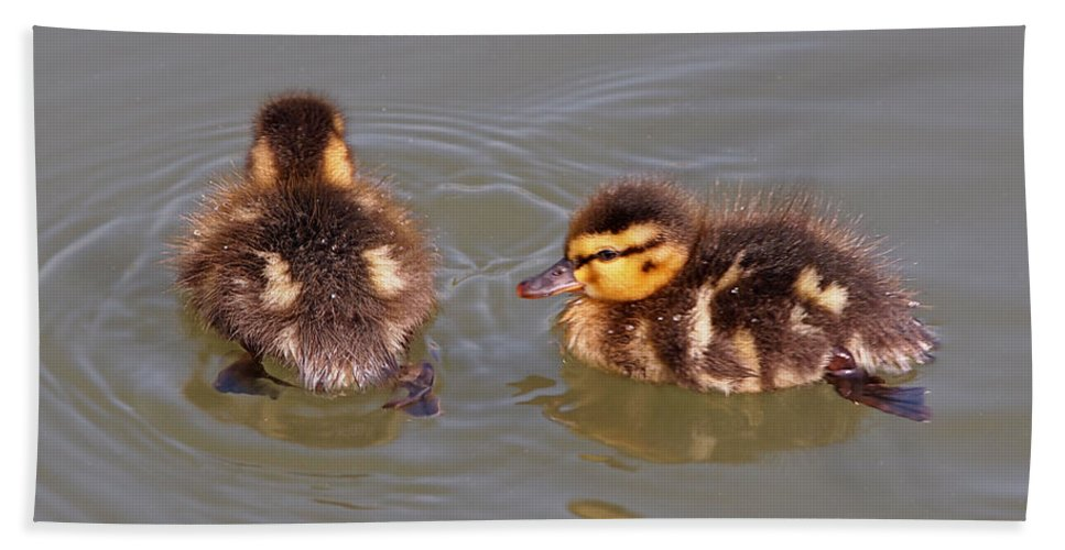 Ducklings Hand Towel featuring the photograph Wait For Me by Gill Billington