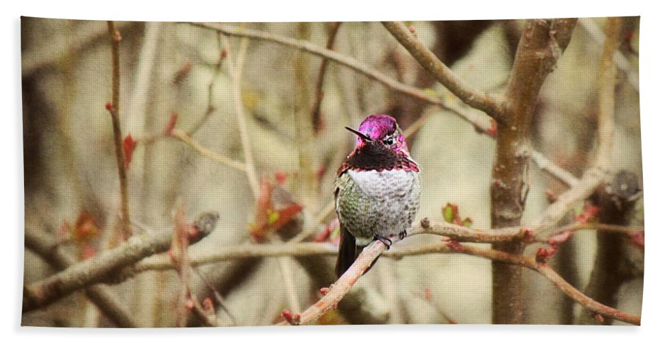 Hummingbird Bath Sheet featuring the photograph Waiting For Blooms by Melanie Lankford Photography