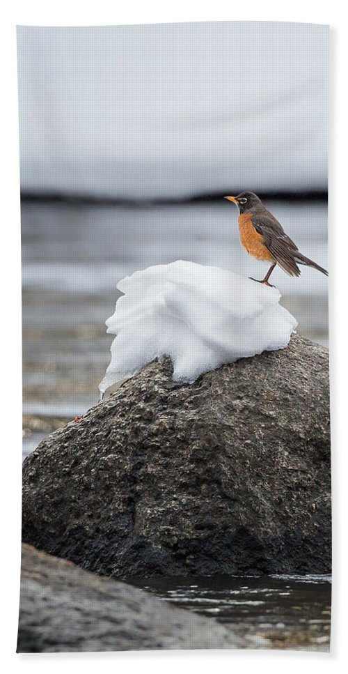 Robin Hand Towel featuring the photograph Waiting For Spring by Bill Wakeley
