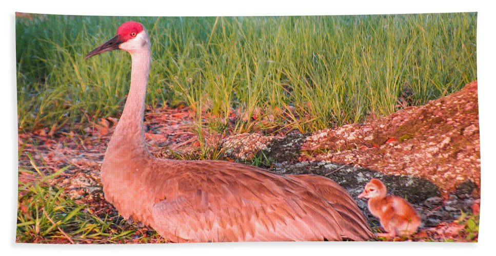 Sandhill Crane Bath Sheet featuring the photograph Waiting For by Zina Stromberg