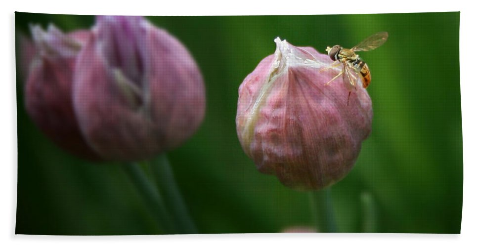 Chives Bath Sheet featuring the photograph Waiting On Chive by Susan McMenamin