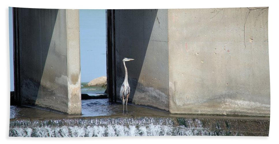 Heron Hand Towel featuring the photograph Waiting On Dinner by Bonfire Photography