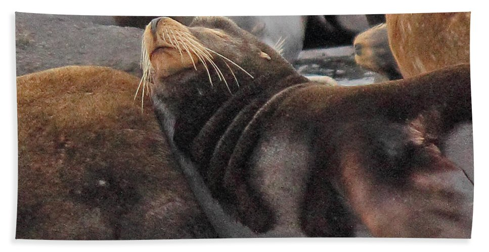 Sea Lion Hand Towel featuring the photograph Wake Me When The Herring Arrive by Randy Hall