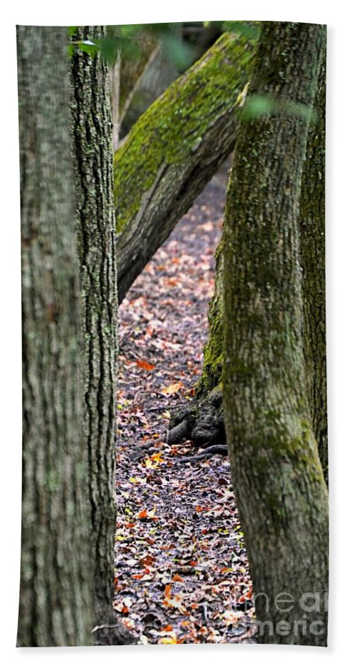 Trees Bath Sheet featuring the photograph Walk Among The Trees by Sharon Woerner