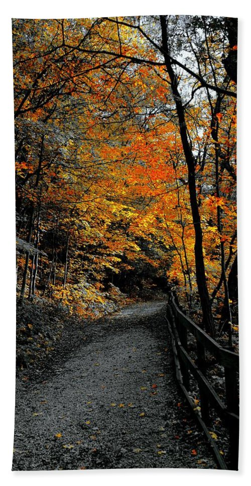 Travels Bath Sheet featuring the photograph Walk In Golden Fall by Tim G Ross