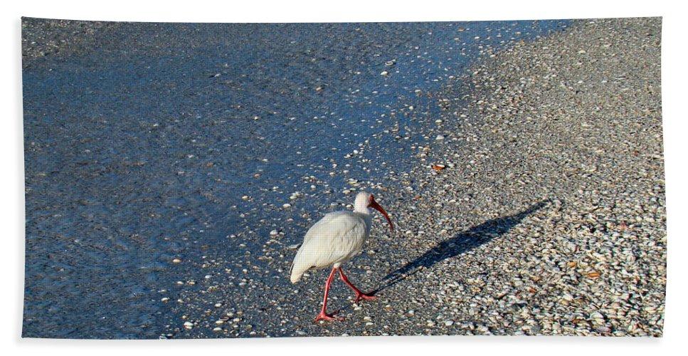 Ibis Bath Sheet featuring the photograph Walk Like An Ibis by Nancy L Marshall