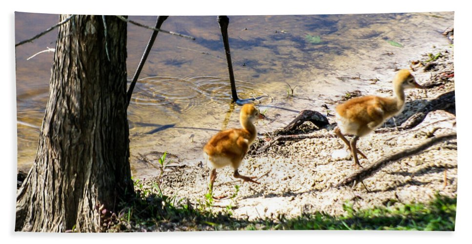 Sandhill Crane Chicks Bath Sheet featuring the photograph Walking Around The Lake by Zina Stromberg