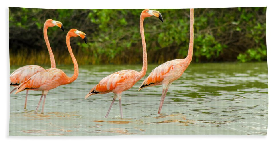 Pink Hand Towel featuring the photograph Walking Flamingos by Jess Kraft