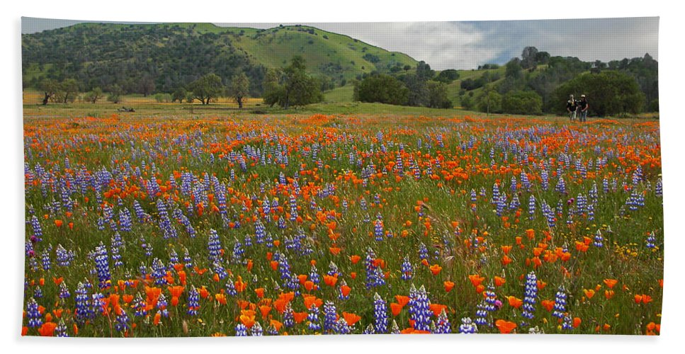 Wildflowers Bath Sheet featuring the photograph Walking In The Wildflowers by Lynn Bauer